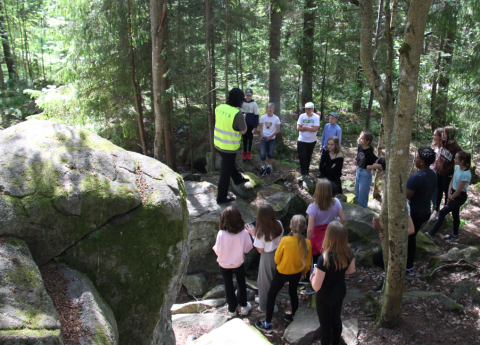 Forest as a learning environment